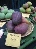 Mango blog 4.jpg