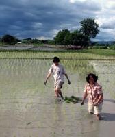 rice-planting-2.jpg