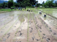 rice-planting-3.jpg