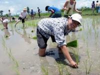 rice-planting-4.jpg