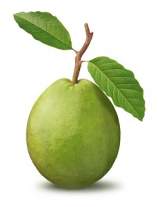 "The Thai word for guava is the same as ""foreigner"" - farang."
