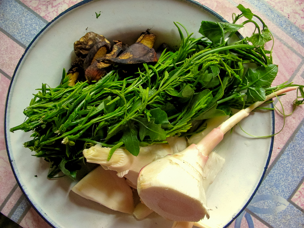 Bounty from the forest that make up to 80% of the upland diet: local mushrooms; feathery, garlicky-tasting acacia shoots; sweet-tasting chayote shoots and white galangal shoots.
